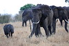Elephants_Mara_North_Elewana__0024