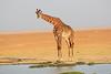 Giraffe_Amboseli_Elewana__0018