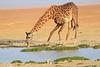 Giraffe_Amboseli_Elewana__0016