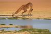Giraffe_Amboseli_Elewana__0001
