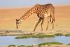 Giraffe_Amboseli_Elewana__0017