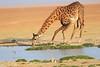 Giraffe_Amboseli_Elewana__0011