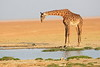 Giraffe_Amboseli_Elewana__0004