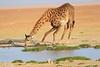 Giraffe_Amboseli_Elewana__0022