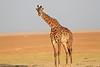 Giraffe_Amboseli_Elewana__0026