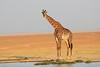 Giraffe_Amboseli_Elewana__0003