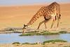 Giraffe_Amboseli_Elewana__0012