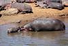 Hippo_Mara_Reserve_Asilia__0266