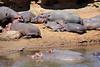 Hippo_Mara_Reserve_Asilia__0251