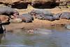 Hippo_Mara_Reserve_Asilia__0002