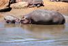 Hippo_Mara_Reserve_Asilia__0304