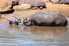 Hippo_Mara_Reserve_Asilia__0293