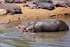Hippo_Mara_Reserve_Asilia__0258
