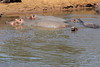 Hippo_Mara_Reserve_Asilia__0238