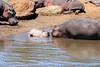 Hippo_Mara_Reserve_Asilia__0330