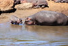 Hippo_Mara_Reserve_Asilia__0302