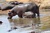 Hippo_Mara_Reserve_Asilia__0023