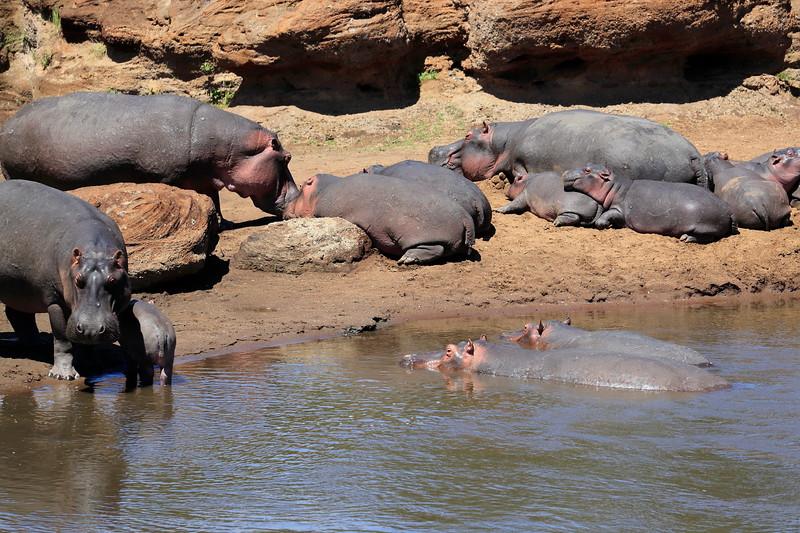 Hippo_Mara_Reserve_Asilia__0001