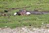 Hippo_Amboseli_Elewana__0011