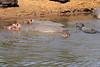 Hippo_Mara_Reserve_Asilia__0249