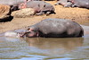 Hippo_Mara_Reserve_Asilia__0312