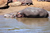 Hippo_Mara_Reserve_Asilia__0307