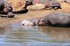 Hippo_Mara_Reserve_Asilia__0329