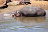 Hippo_Mara_Reserve_Asilia__0319