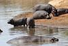 Hippo_Mara_Reserve_Asilia__0003