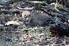 Leopard_Mara_Reserve_Asilia__0008