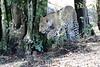 Leopard_Mara_Reserve_Asilia__0013