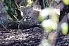 Leopard_Mara_Reserve_Asilia__0004