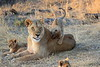 Lion_Cubs_Mara_North_Elewana__0009