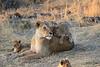 Lion_Cubs_Mara_North_Elewana__0008