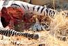 Lion_Cubs_Mara_North_Elewana__0917