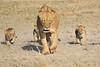 Lion_Cubs_Amboseli_Elewana__0035