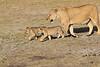 Lion_Cubs_Amboseli_Elewana__0005