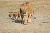 Lion_Cubs_Amboseli_Elewana__0031
