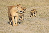 Lion_Cubs_Amboseli_Elewana__0046
