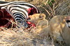 Lion_Cubs_Mara_North_Elewana__0898