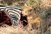 Lion_Cubs_Mara_North_Elewana__0911