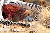 Lion_Cubs_Mara_North_Elewana__0921