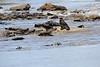 Nile_Crocodile_Mara_Reserve_Asilia__0018