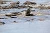 Nile_Crocodile_Mara_Reserve_Asilia__0014