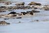 Nile_Crocodile_Mara_Reserve_Asilia__0008