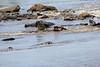 Nile_Crocodile_Mara_Reserve_Asilia__0025