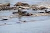 Nile_Crocodile_Mara_Reserve_Asilia__0027