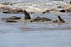 Nile_Crocodile_Mara_Reserve_Asilia__0079