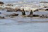Nile_Crocodile_Mara_Reserve_Asilia__0076
