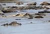 Nile_Crocodile_Mara_Reserve_Asilia__0006